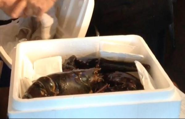 110-year-old-15-pound-lobster-rescued-from-Florida-restaurant