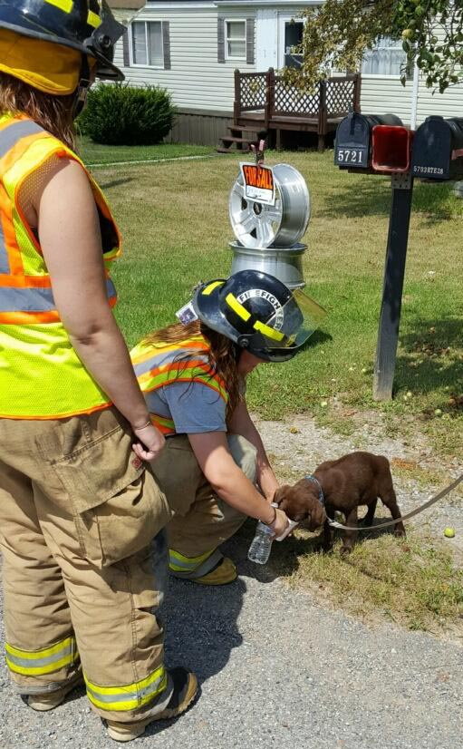 Hawthorn firefighters Taylor Eberle and Taylor Burkett taking care of a puppy in the hot temperatures following a multi-vehicle accident Sunday. The two volunteer firefighters made sure the dog had enough water and shade while it was waiting for a new ride. Photo submitted by Curt Kiehl.