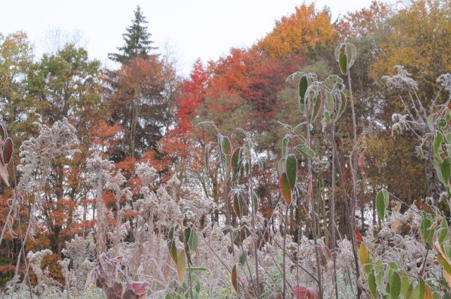 """""""Frosty morning in Southern Clarion County (October 26, 2016).""""  Submitted by Diana Kunselman."""