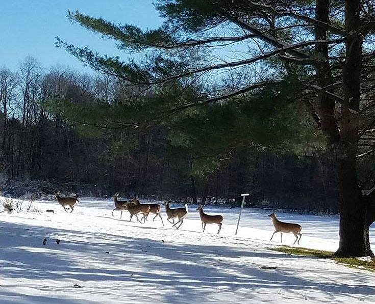 Photo courtesy of Fair Winds in the Forest Cabins & Lodge - November 23, 2016.