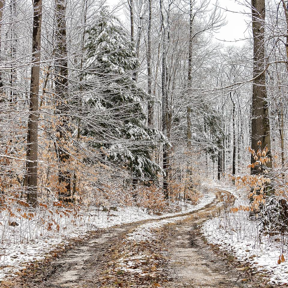 """""""Allegheny National Forest, Forest County.""""  Photo courtesy of Rusty Glessner Photography."""