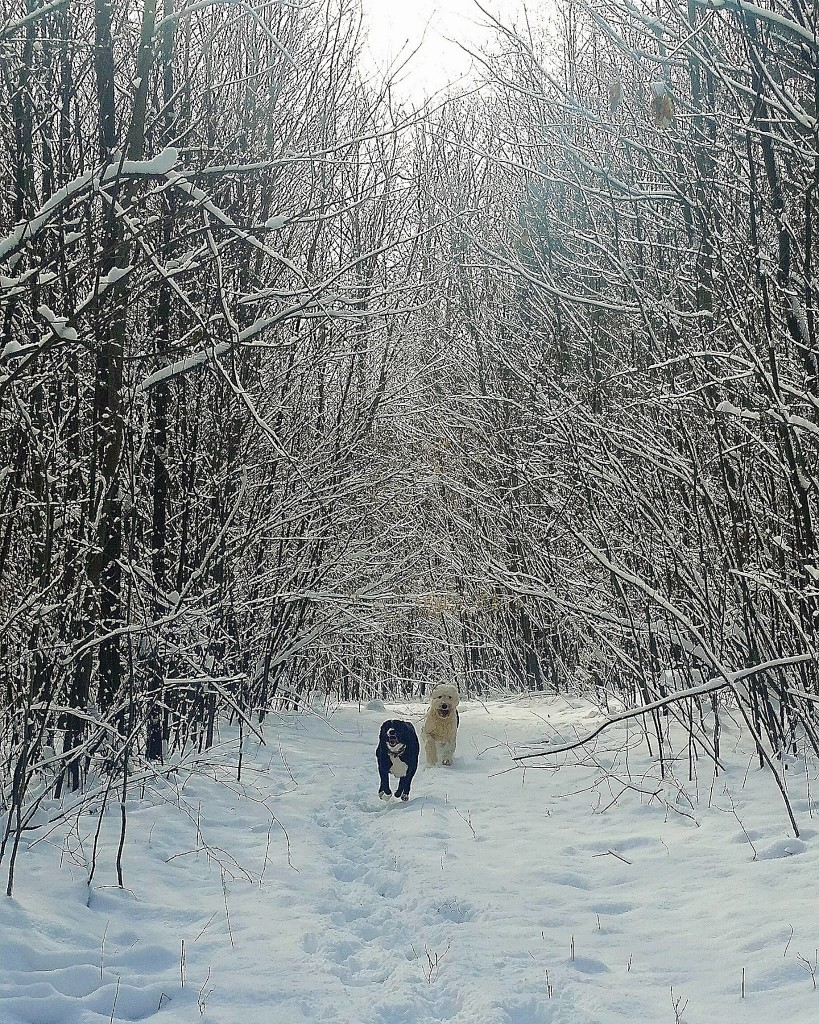 """""""Monty and Mowgli racing through the snow in Leeper (February 2, 2017).""""  Submitted by Kelsey Ryan Wells."""