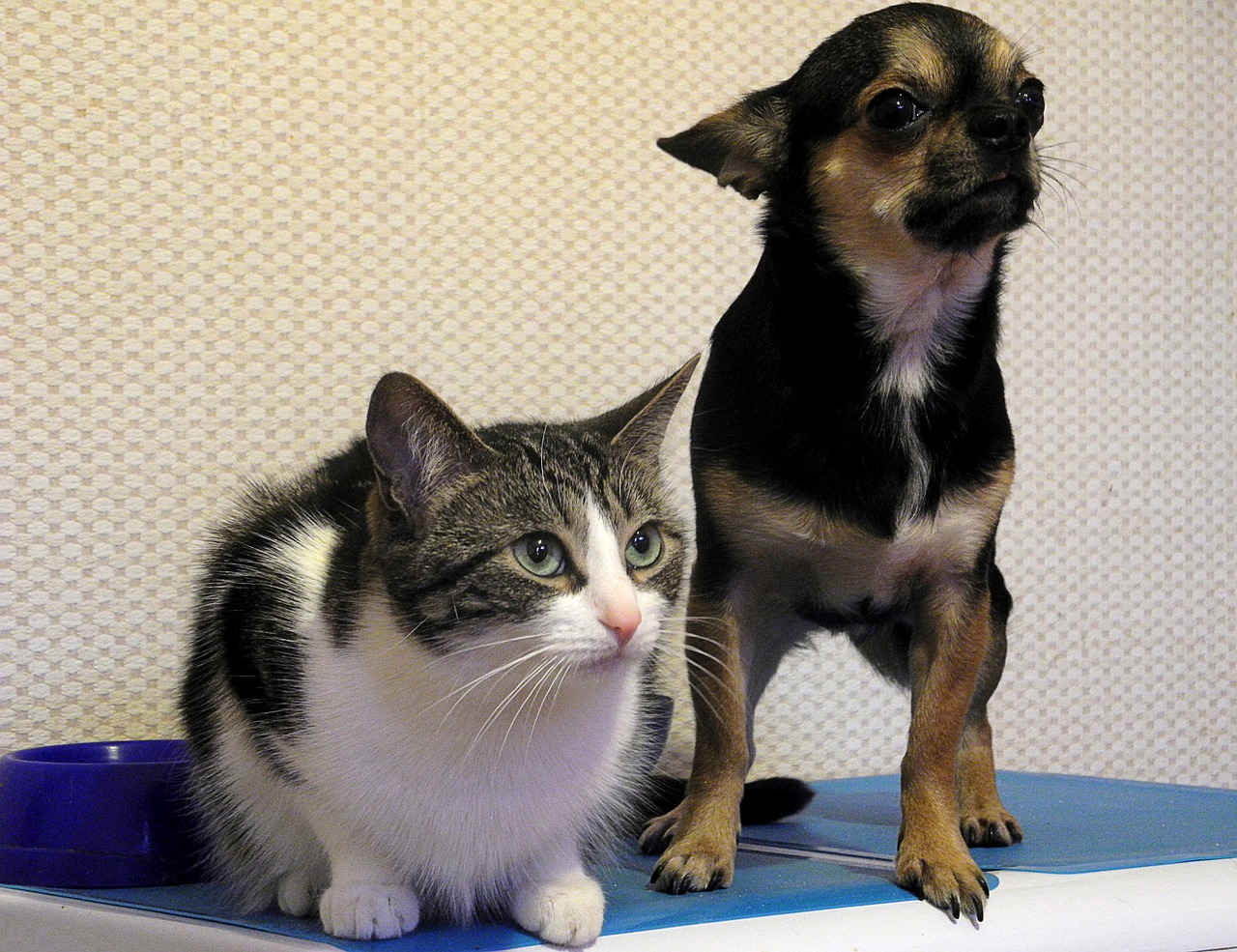 cat-and-dog-975023_1280