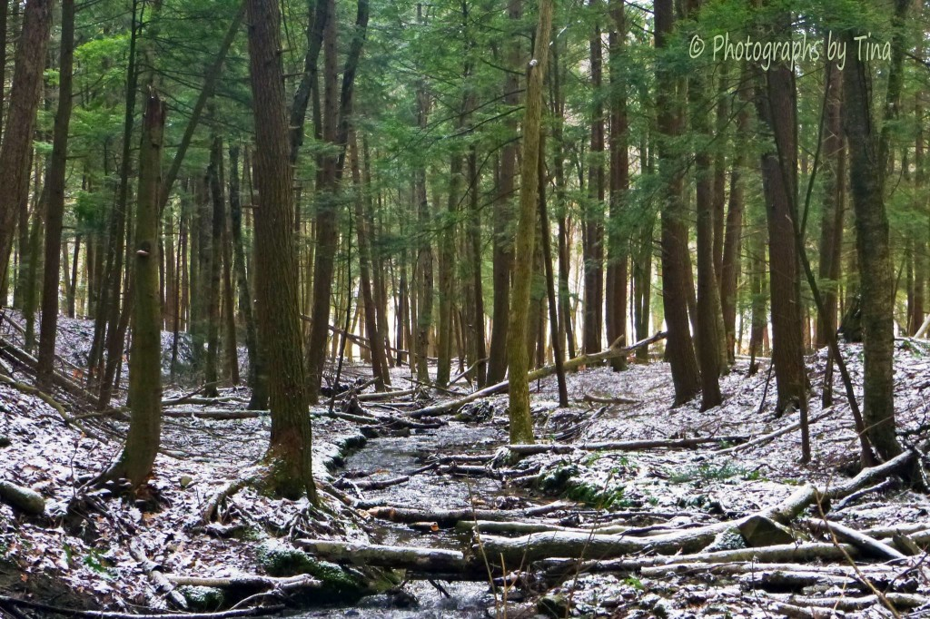 The Allegheny National Forest in February. Photo courtesy Photographs by Tina.