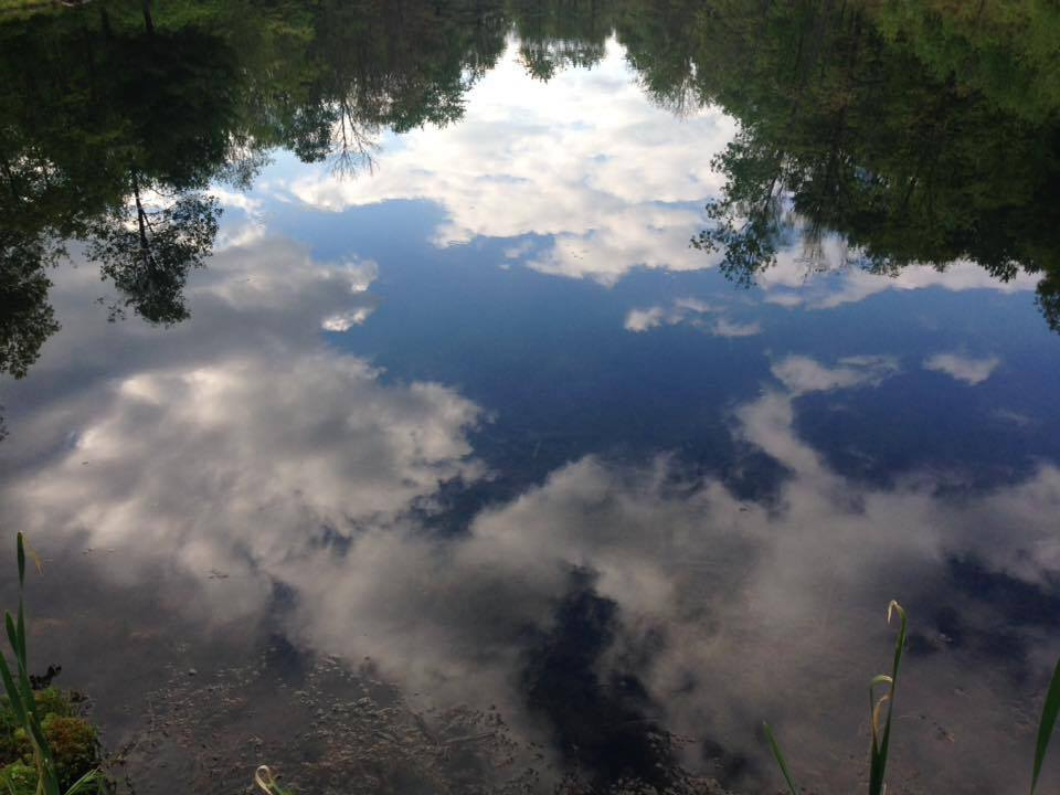 Reflection in a pond near Rimersburg. Submitted by Scott Campbell.