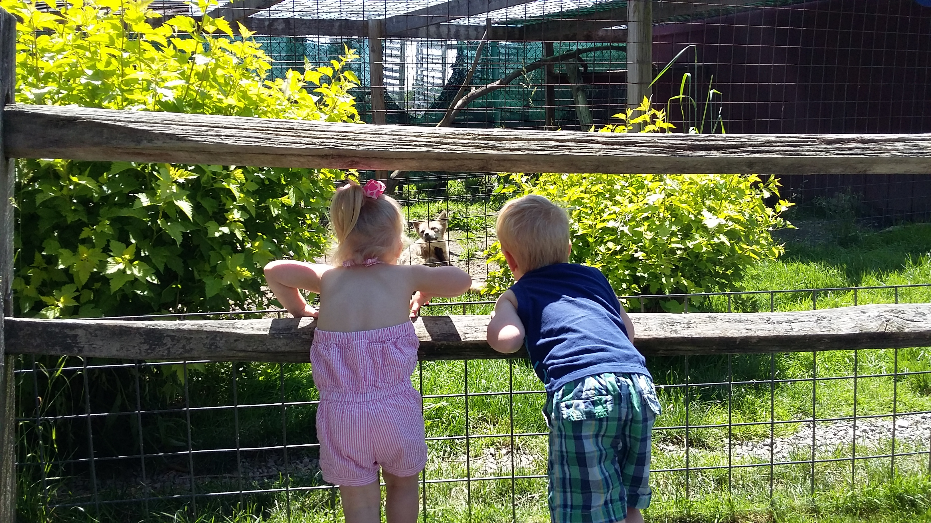 Issac and Charlotte got a good look at the animals at The Farmer's Inn reopening event on Friday, June 9.  Submitted by Crystal Tharan.