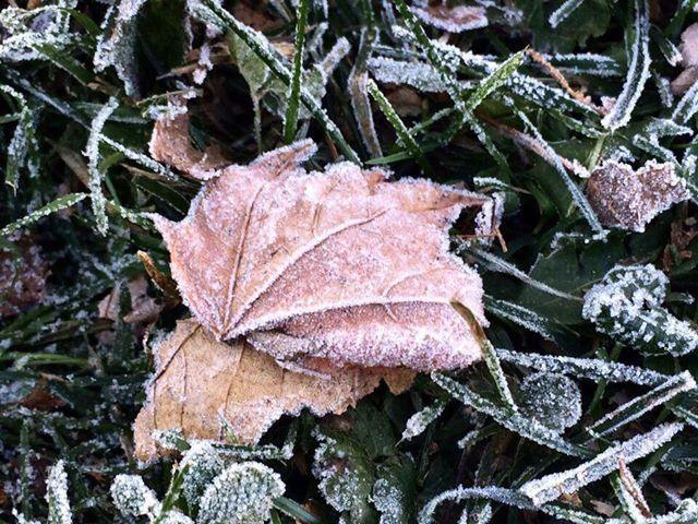 Frosty morning in Lucinda. Photo submitted by Erin Rachel.