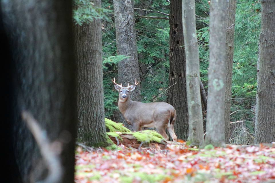 Taken in Cook Forest. Photo courtesy Fair Winds in the Forest Cabins & Lodge.