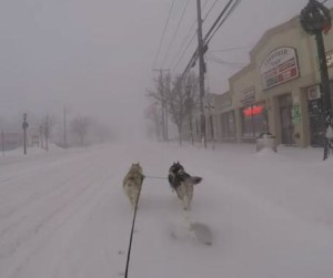 Dogs-pull-man-on-bicycle-through-city-streets-during-snowstorm