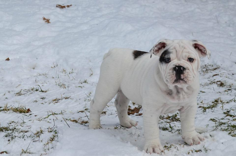 Murph enjoying the snow in Clarion on a sunny Sunday. Submitted by Sarah Smith.