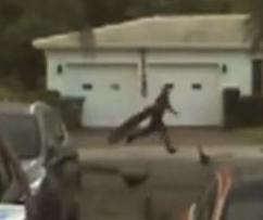 Flock-of-peacocks-chase-alleged-thief-in-Florida