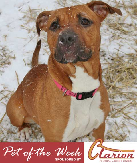 pet-of-the-week-march19