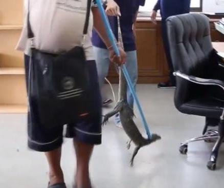 Monitor-lizard-falls-through-office-ceiling-lands-on-workers-desk