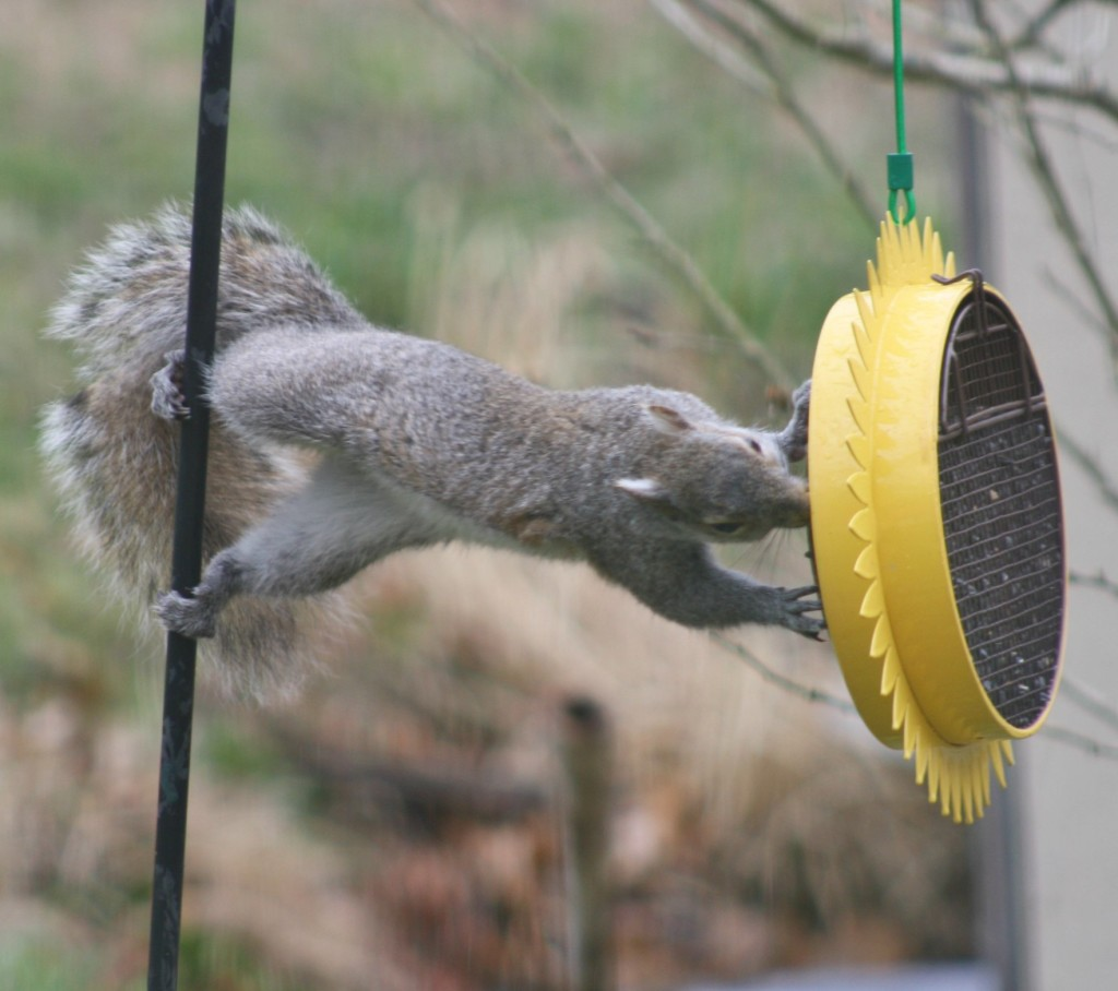 This little guy just had to get those sunflower seeds! Submitted by Laurie Kifer.