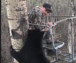 Bear-joins-young-hunter-in-tree-stand