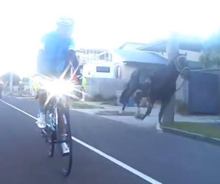 Escaped-horses-chase-cyclists-down-the-highway
