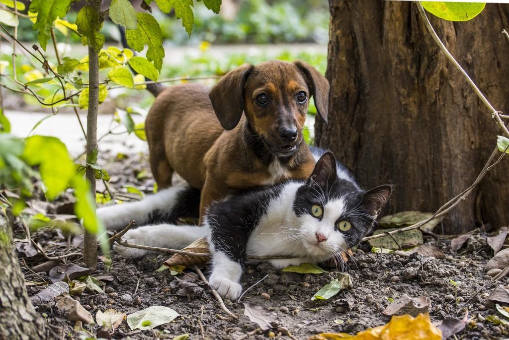 dog-2059668_1280-1024x685