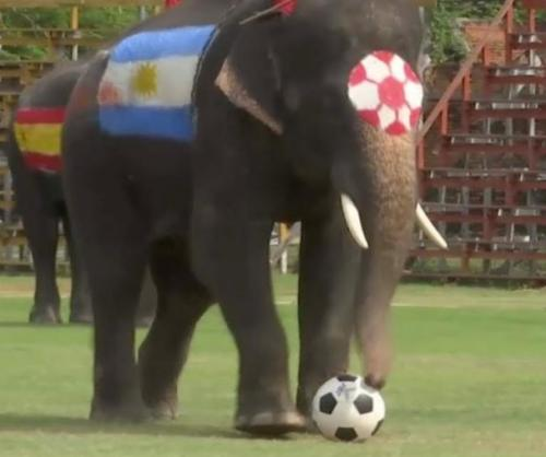 Elephants-play-soccer-to-discourage-World-Cup-gambling