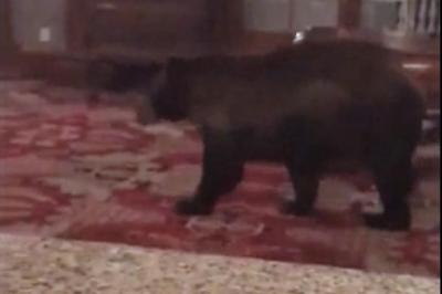 Bear-wanders-through-lobby-of-Colorado-hotel