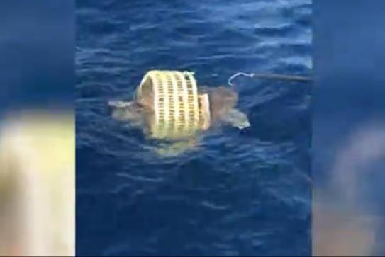 Fishing-friends-rescue-sea-turtle-from-plastic-basket