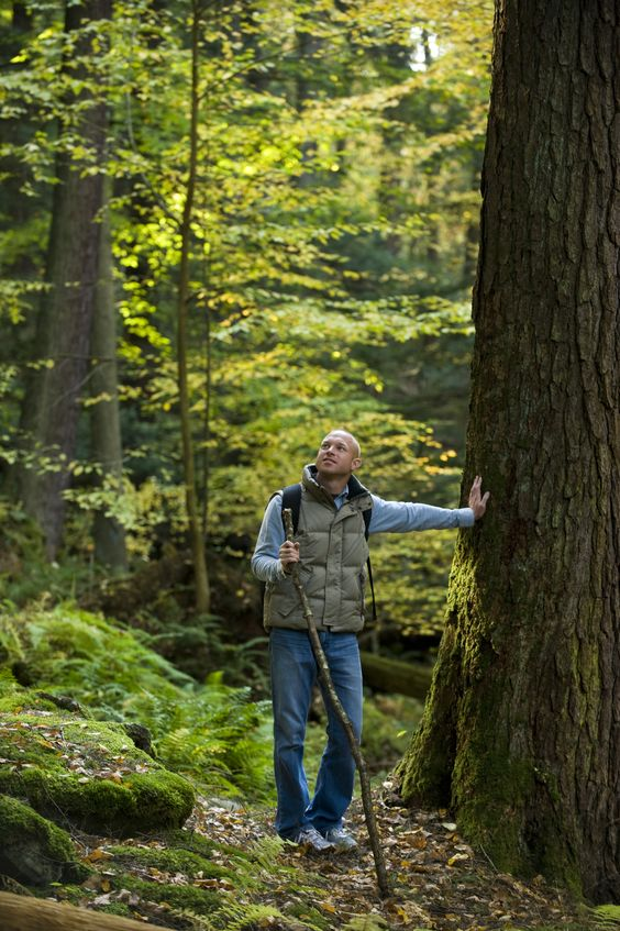 A hiker takes a moment to take in the massive hemlocks and white pines in Cook Forest State Park.