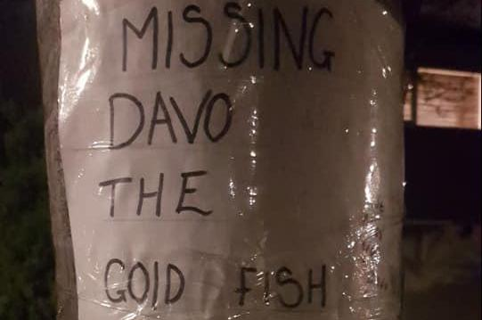 Woman-in-Great-Britain-seeking-lost-goldfish-Dave