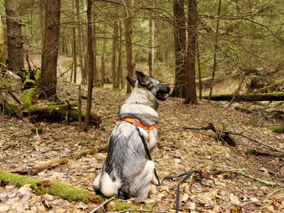 Buster out for a hike in the Lucinda area. Photo by Les Schmader. Submitted by Heather Ritchey.