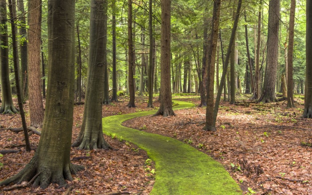 Cook-Forest-winding-moss-Emerald-Path-American-beech-trees-Michael-Henderson-1080x675