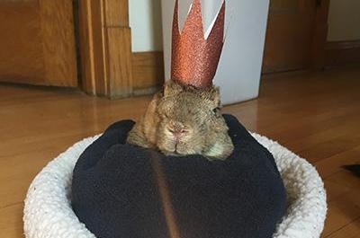Illinois-rabbit-16-dubbed-worlds-oldest-by-Guinness