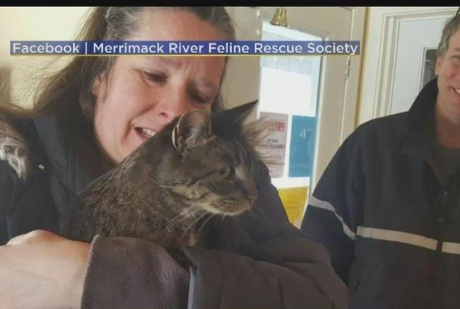 Missing-cat-turns-up-20-miles-away-5-12-years-later