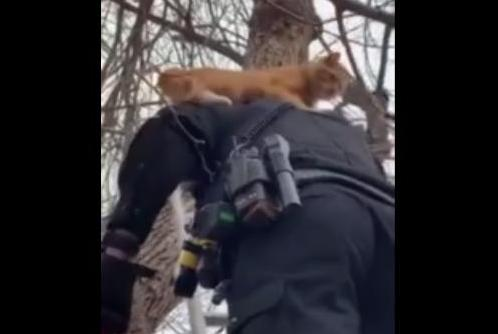 Police-officer-gives-treed-cat-a-piggyback-ride
