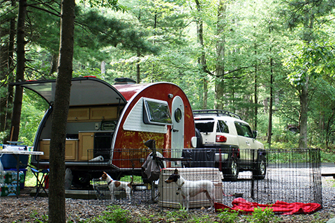 RV Campsite with Pets