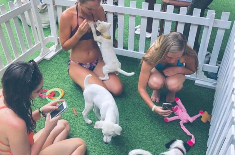 Indonesian-hotel-offers-poolside-puppy-therapy-for-guests