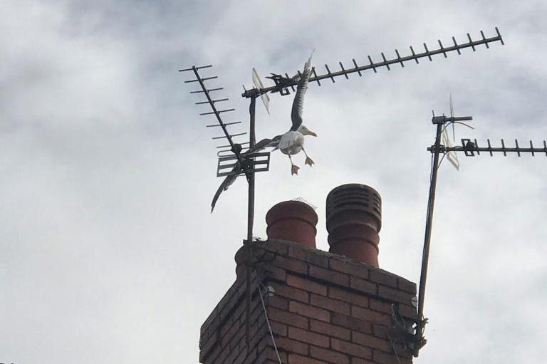 Firefighters-rescue-seagull-impaled-on-rooftop-TV-antenna