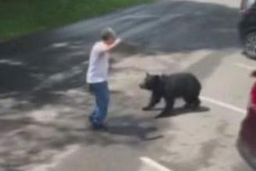 Park-visitor-filmed-confronting-bears-mother-bear-charges