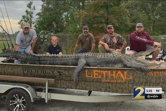 Georgia-hunter-lands-state-record-700-pound-alligator