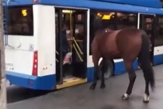 Loose-horse-attempts-to-board-bus-at-Russian-stop