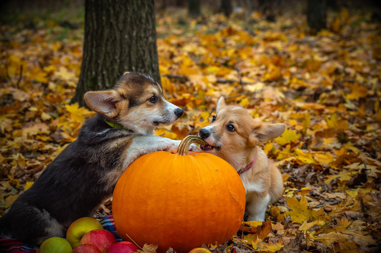Halloween 2020 Pembroke Cinema Local Shelter Warns Public of Risks for Pets During Halloween