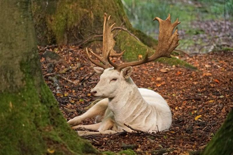 Authorities-in-Texas-hunting-for-exotic-deer-on-the-loose
