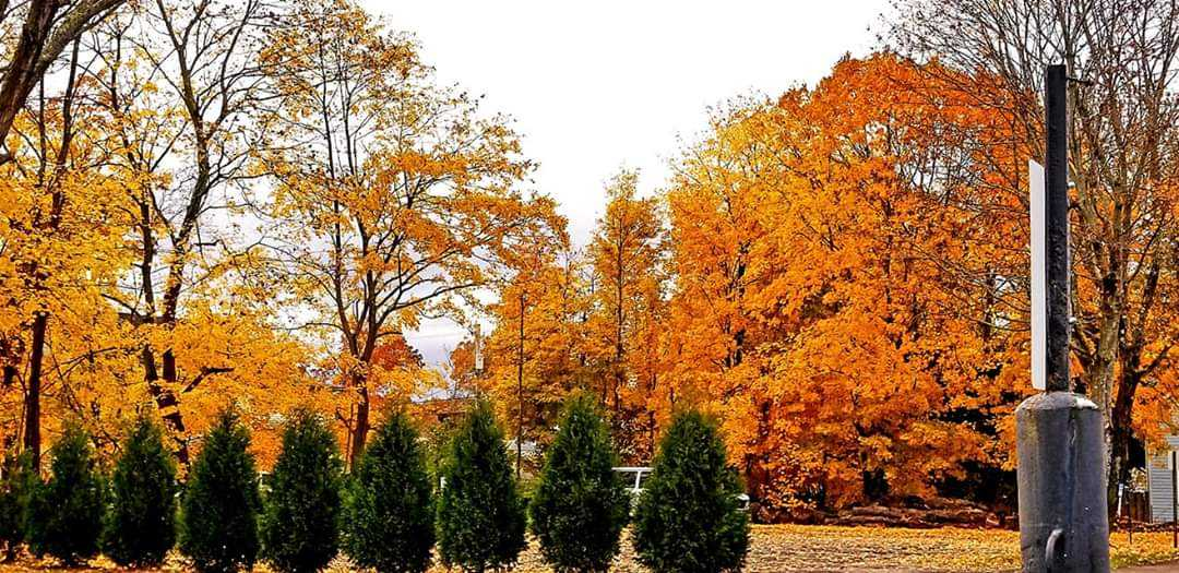 Autumn colors in downtown Clarion. Submitted by Darren Troese.