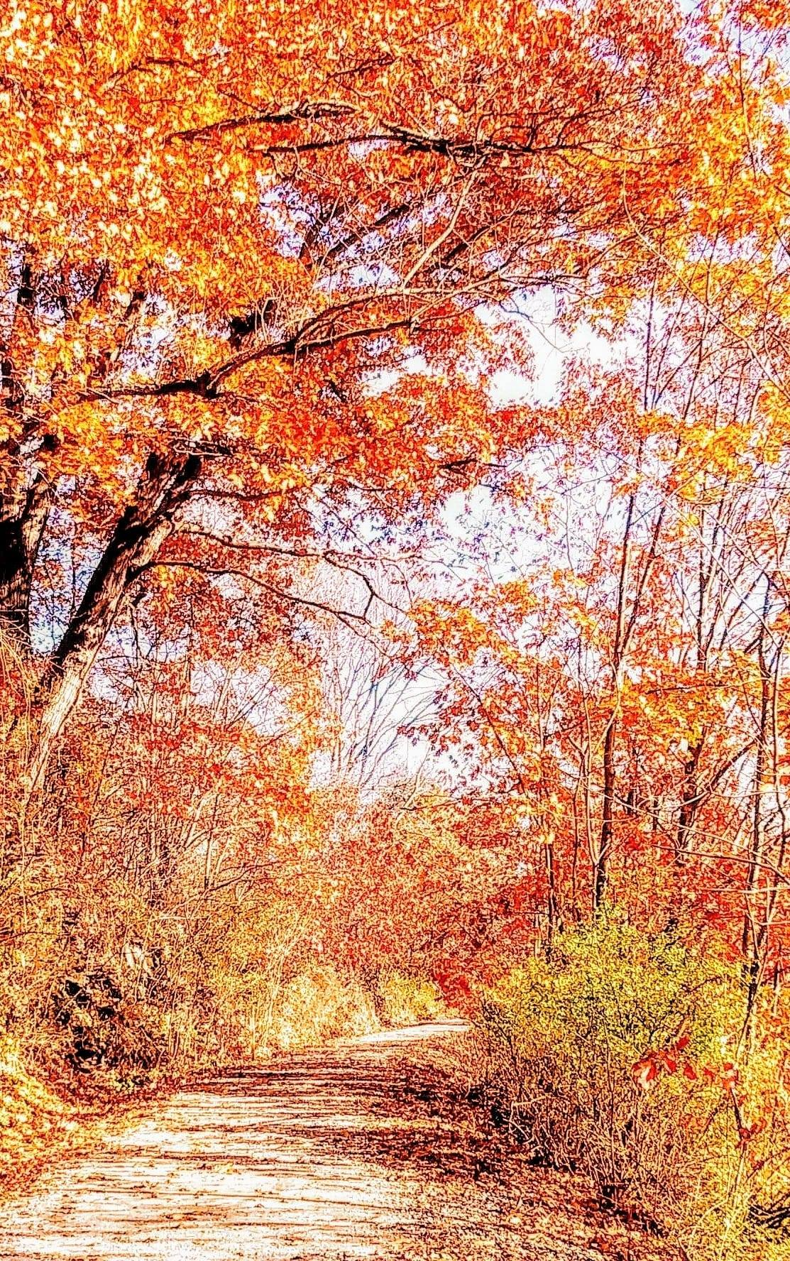 Redbank Valley Trail near New Bethlehem. Submitted by David Proper.
