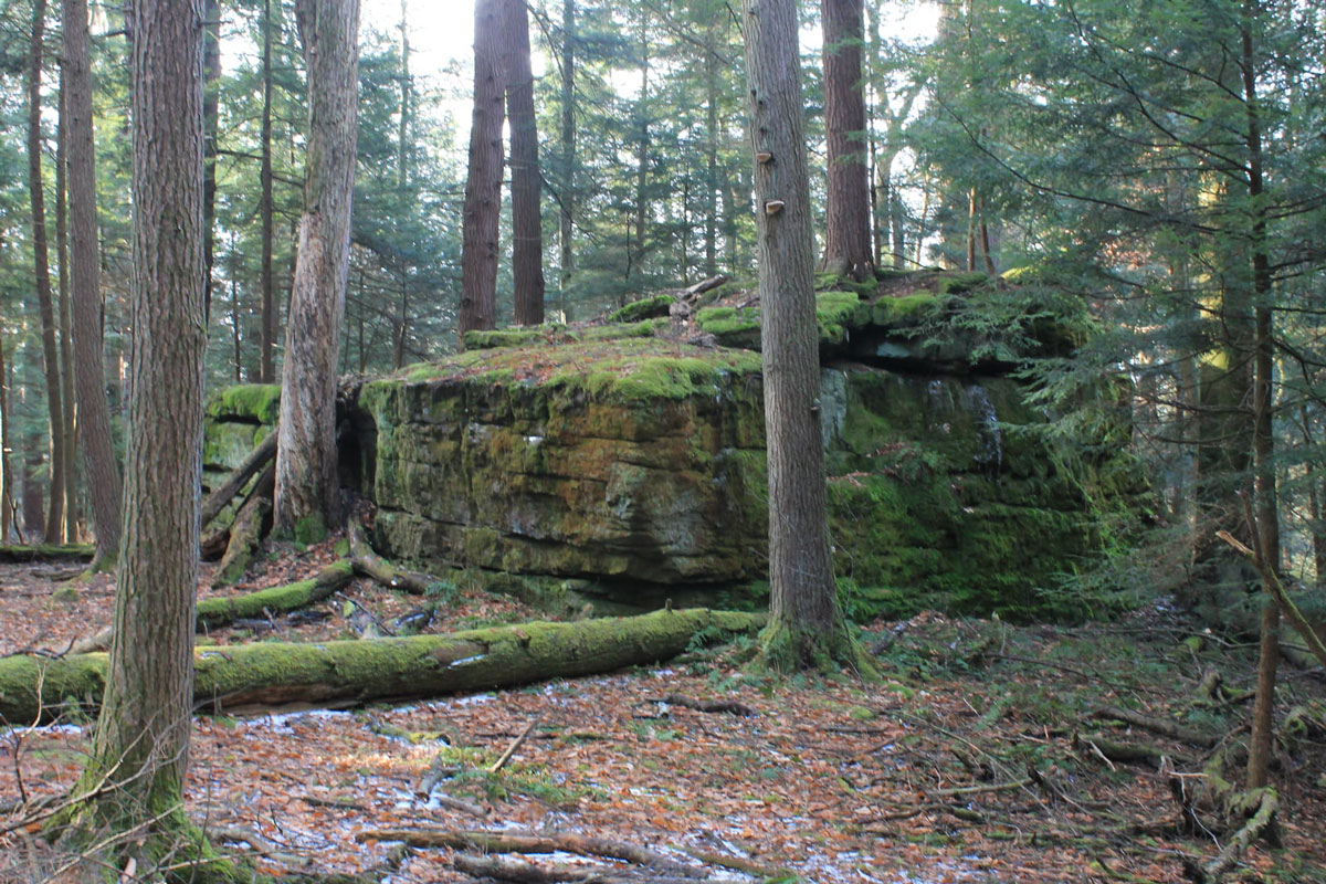 Boulder along Forest Cathedral trail in Cook Forest. Photo by Laura Kosht, courtesy of Hiking & Backpacking Pennsylvania.