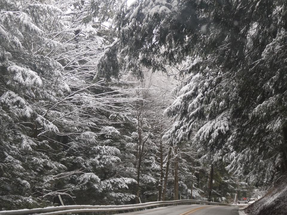 Snowy day in Cook Forest. Photo by Shannon O'Dell Albert, courtesy of Friends of Cook Forest.