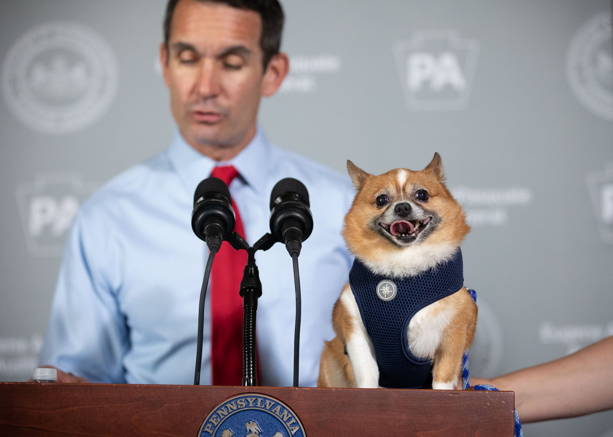 Auditor with Dog
