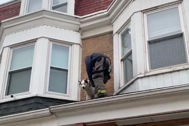 Firefighters-rescue-dog-stranded-on-Pennsylvania-roof