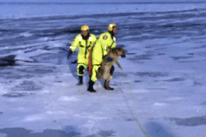 Firefighters-rescue-dog-that-fell-through-ice-on-the-Minnesota-River