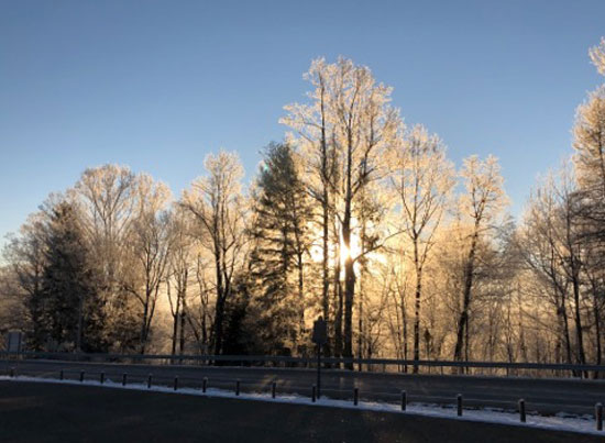 Frost on the trees near the Narrows. Submitted by Scott Campbell.