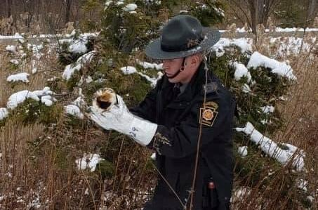 Pennsylvania-State-Police-rescue-guinea-pigs-next-to-road
