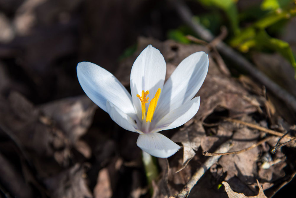First signs of spring. Courtesy of John McCullough Photography.