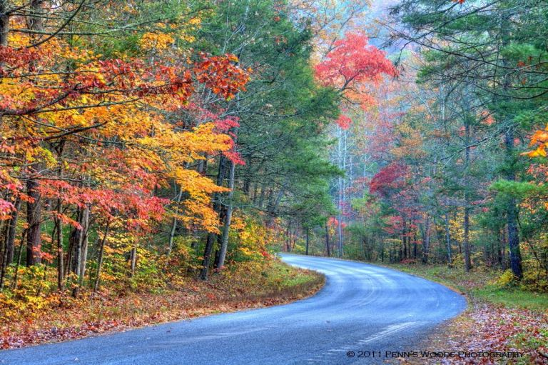 Fall-leaves-road-Penns-Woods-Photography